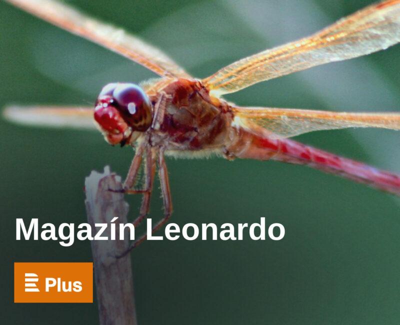 Magazín Leonardo podcast