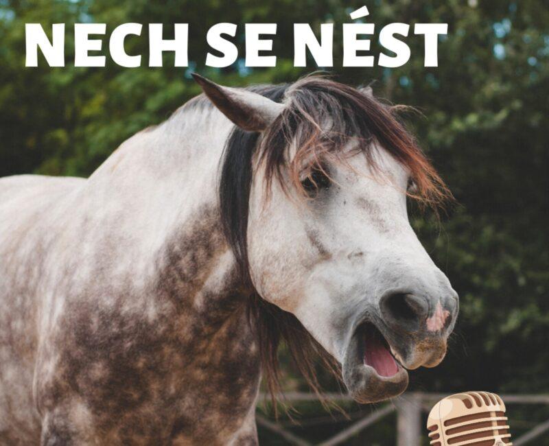 Nech se nést aneb o koních a lidech